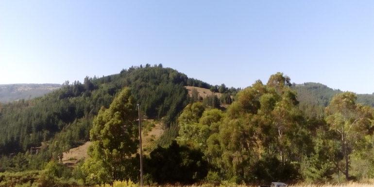 CAMPO-DE-SESENTA-HECTAREAS-5-770x386